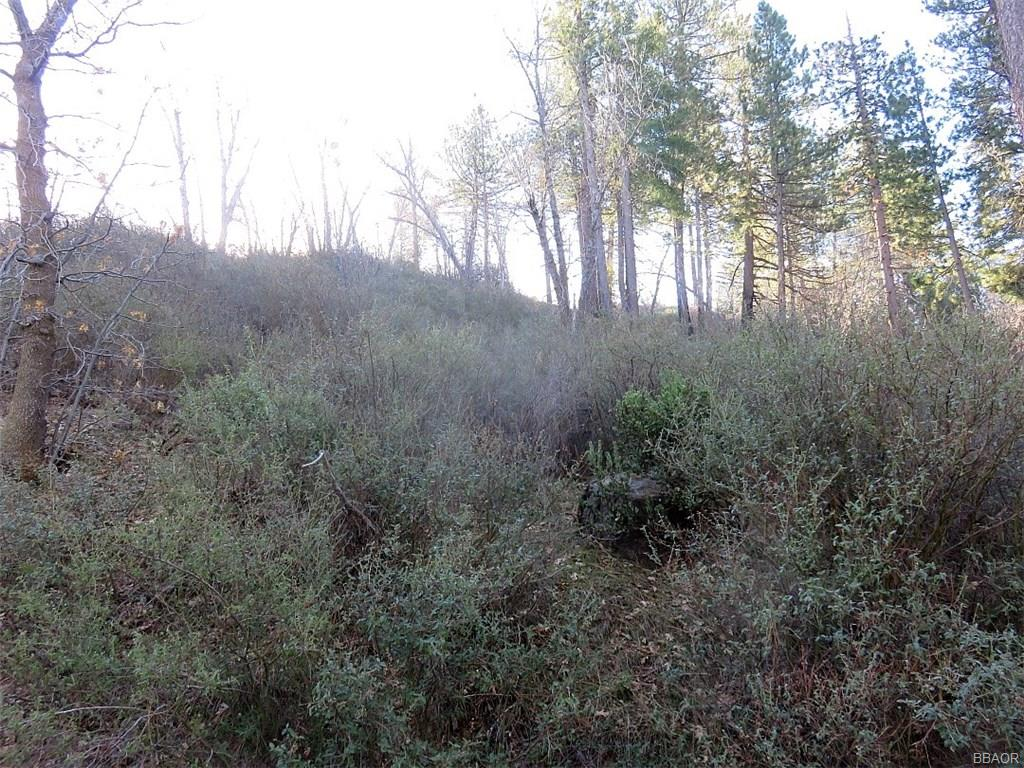 0 Maple Drive Property Photo - Cedar Glen, CA real estate listing