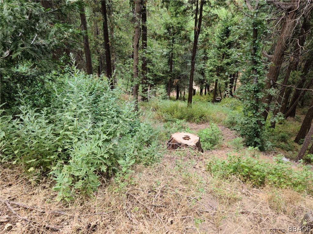0 Cedar Pines Drive Property Photo