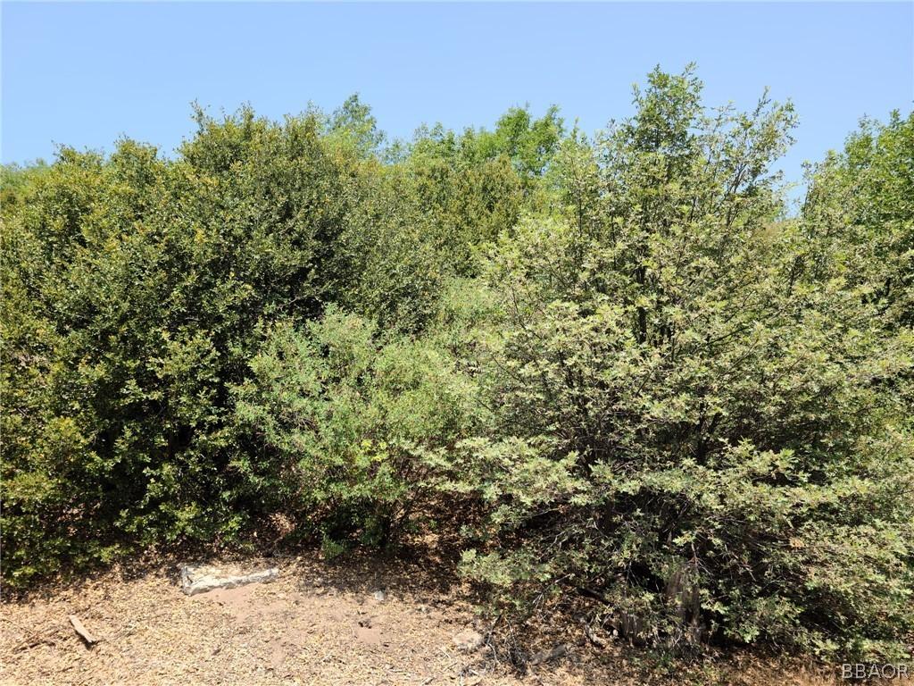 0 Pine Drive Property Photo 1
