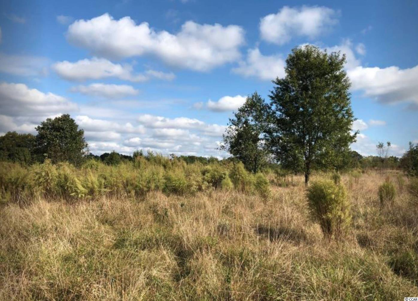 0 Abner Creek Rd. Property Photo 7
