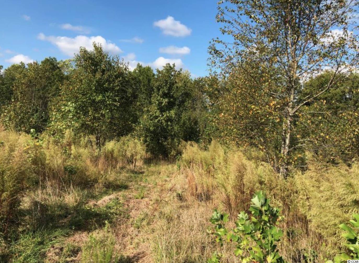 0 Abner Creek Rd. Property Photo 9