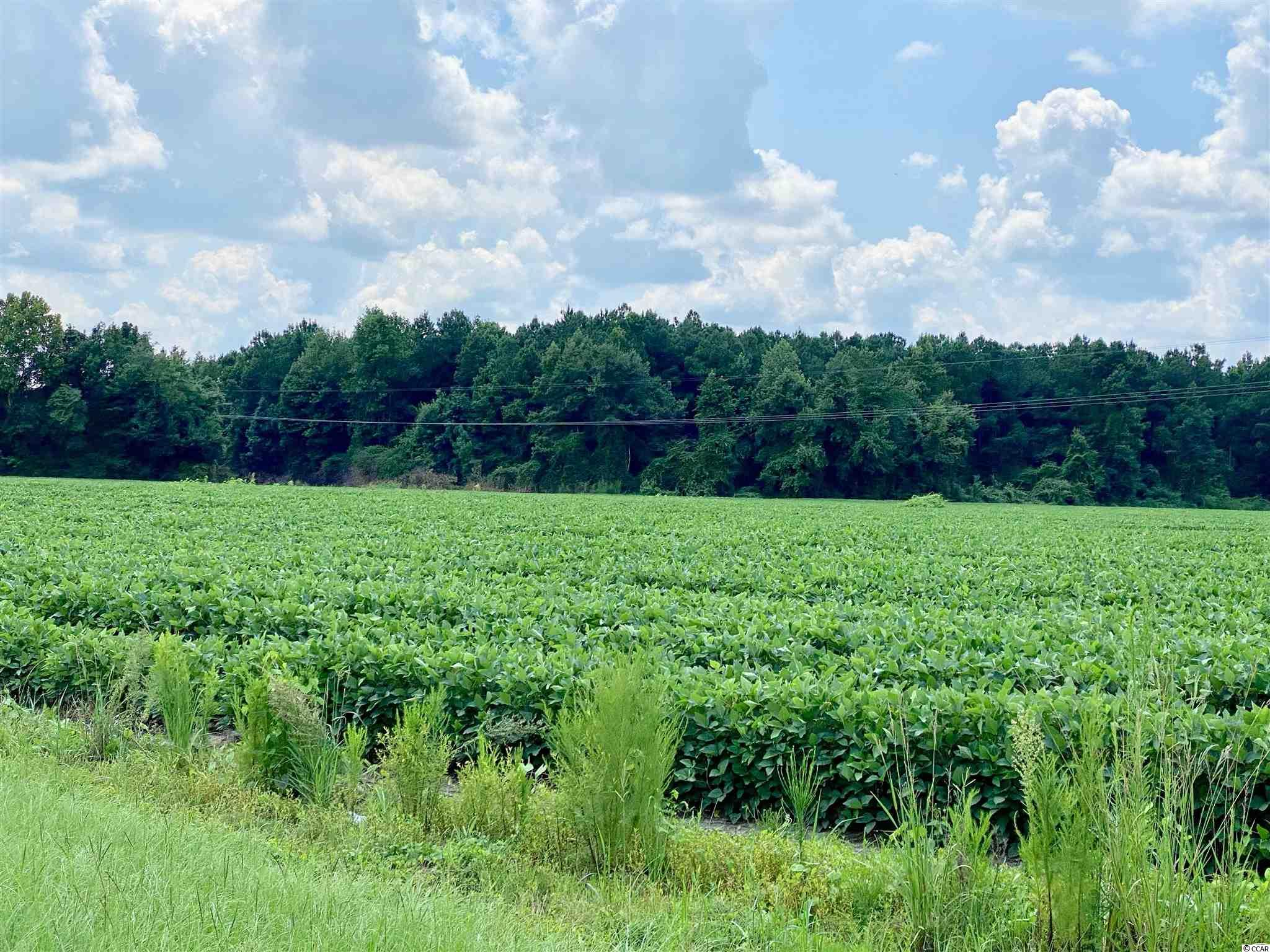 Tbd Highway 501 Property Photo 20