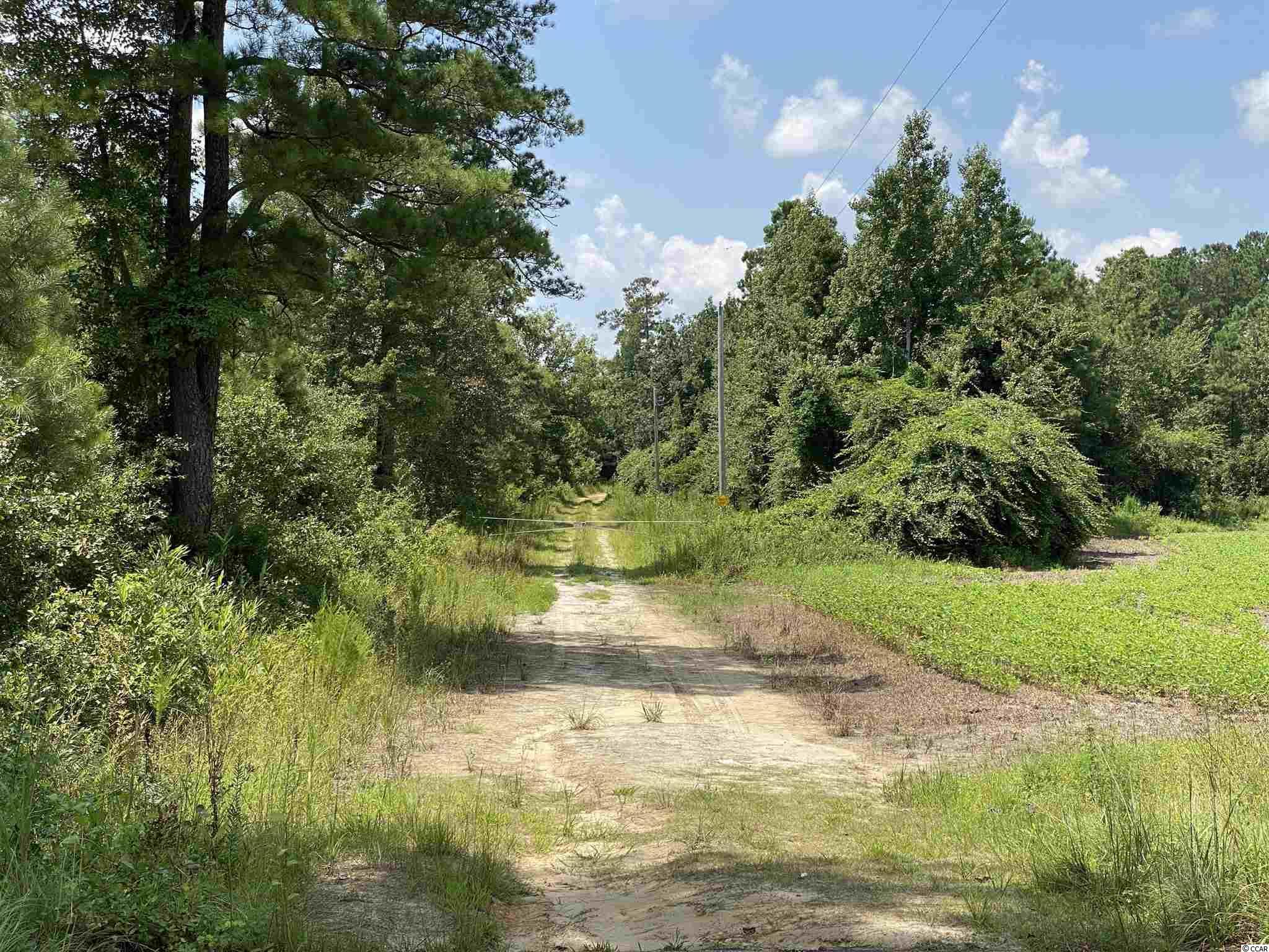 Tbd Highway 501 Property Photo 24