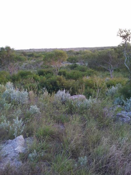6 Carmel Drive Property Photo - Sandia, TX real estate listing