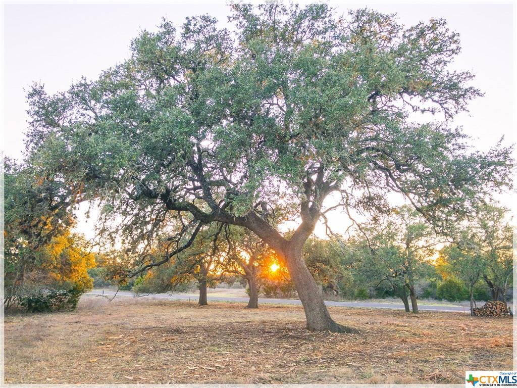 LOT 8 Sabinas Creek Ranch Rd Property Photo