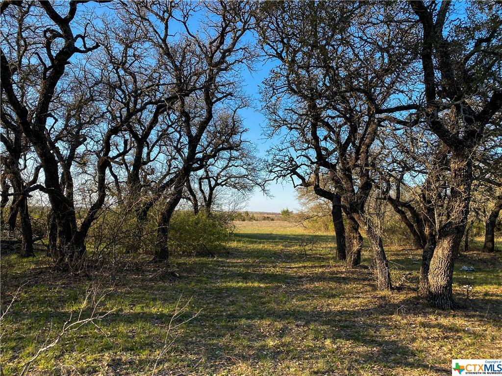Tract 2 CR 425 Property Photo - Purmela, TX real estate listing