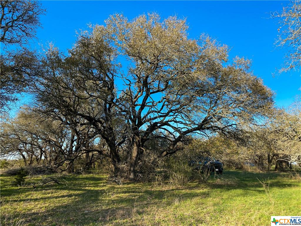 Tract 3 CR 425 Property Photo - Purmela, TX real estate listing