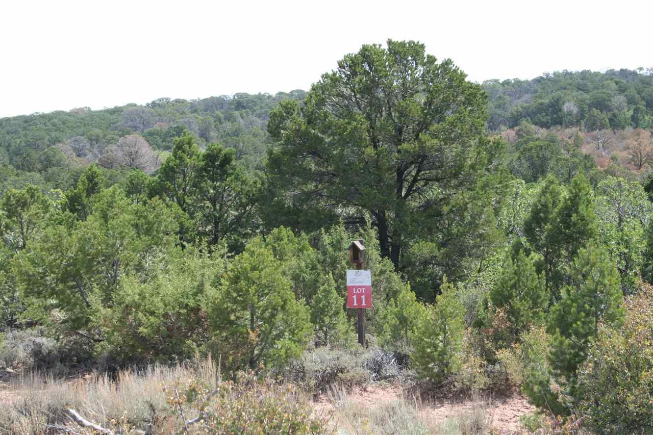 18961 Elk Reserve Road Property Photo - Glade Park, CO real estate listing