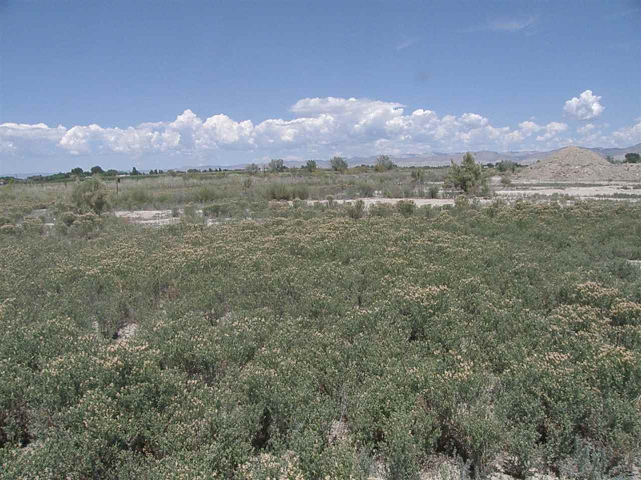TBD 21 1/2 Road Property Photo - Grand Junction, CO real estate listing
