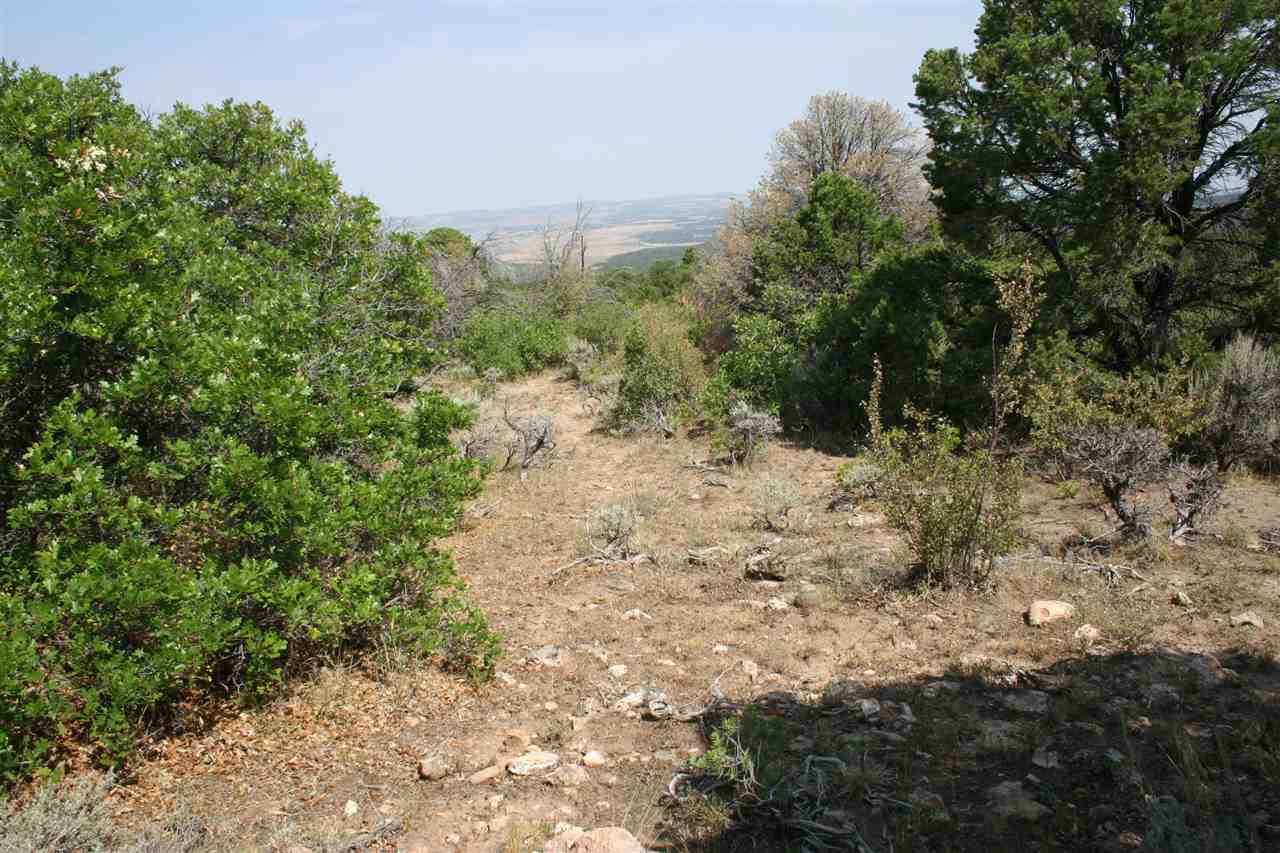 6001 Elk Ranch Road Property Photo - Glade Park, CO real estate listing