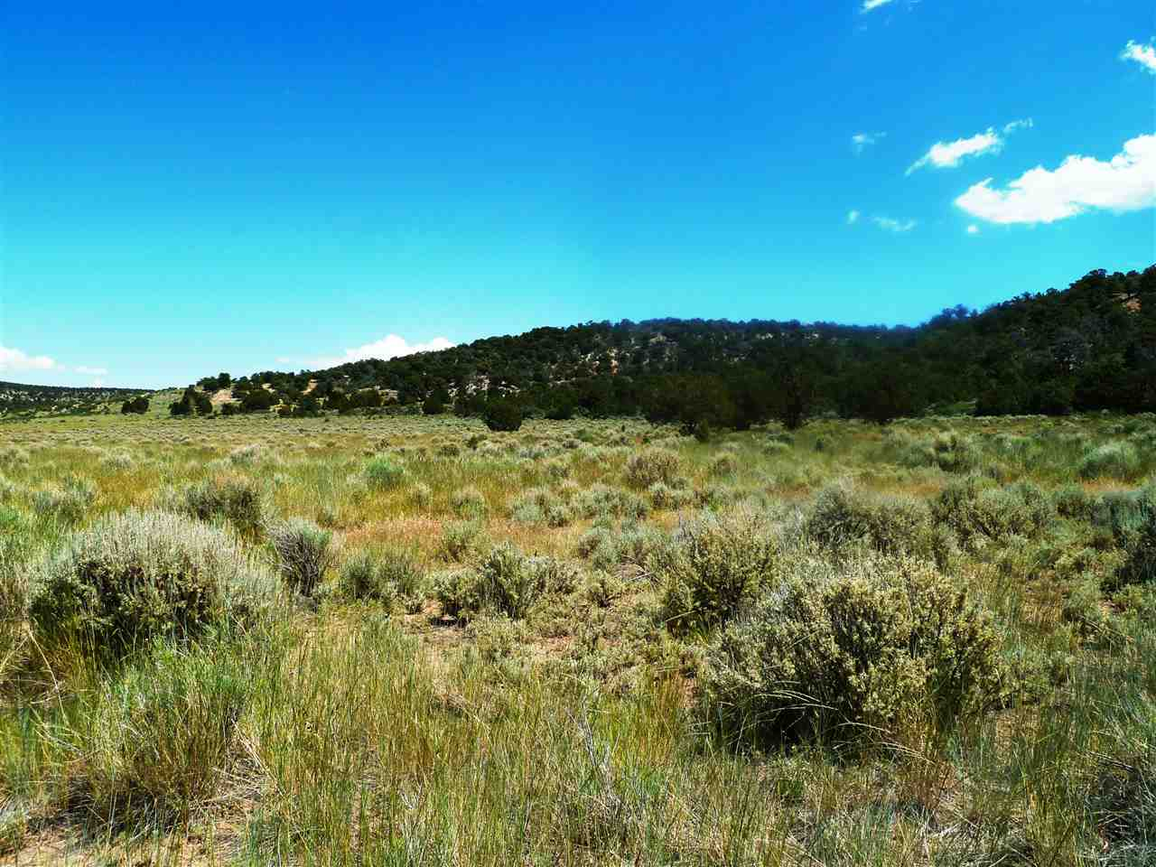 Lot 54 Masters Ranch Drive Property Photo - Glade Park, CO real estate listing