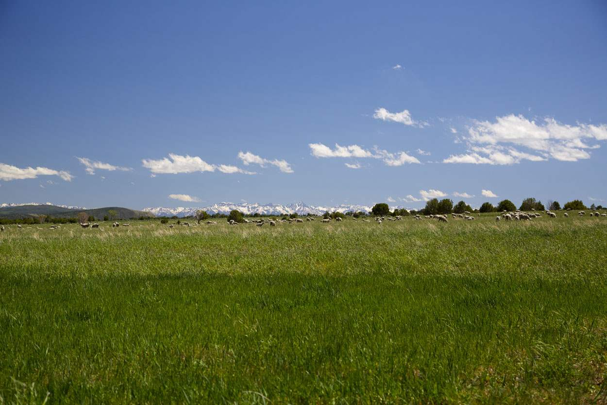 TBD Bostwick Park Street Property Photo - Montrose, CO real estate listing
