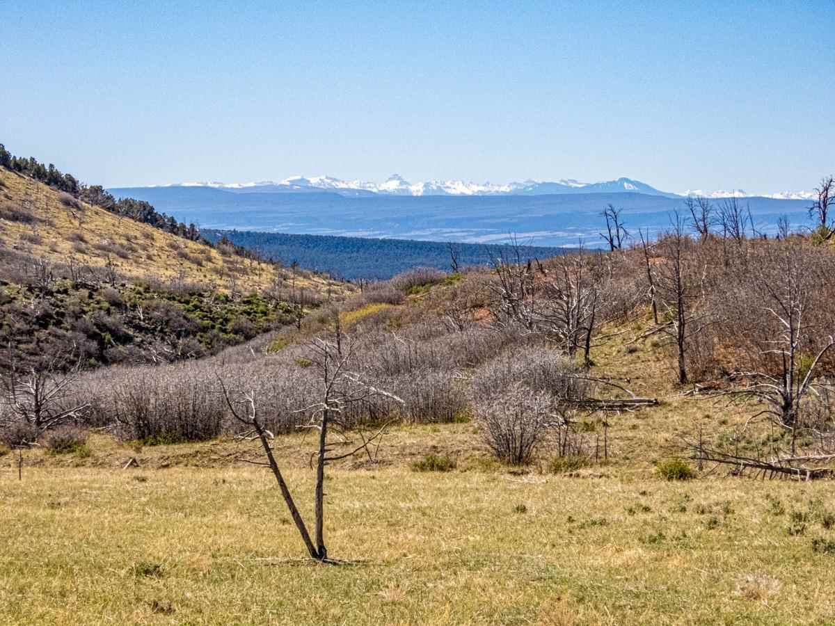18495 Currant Creek Road Property Photo - Cedaredge, CO real estate listing