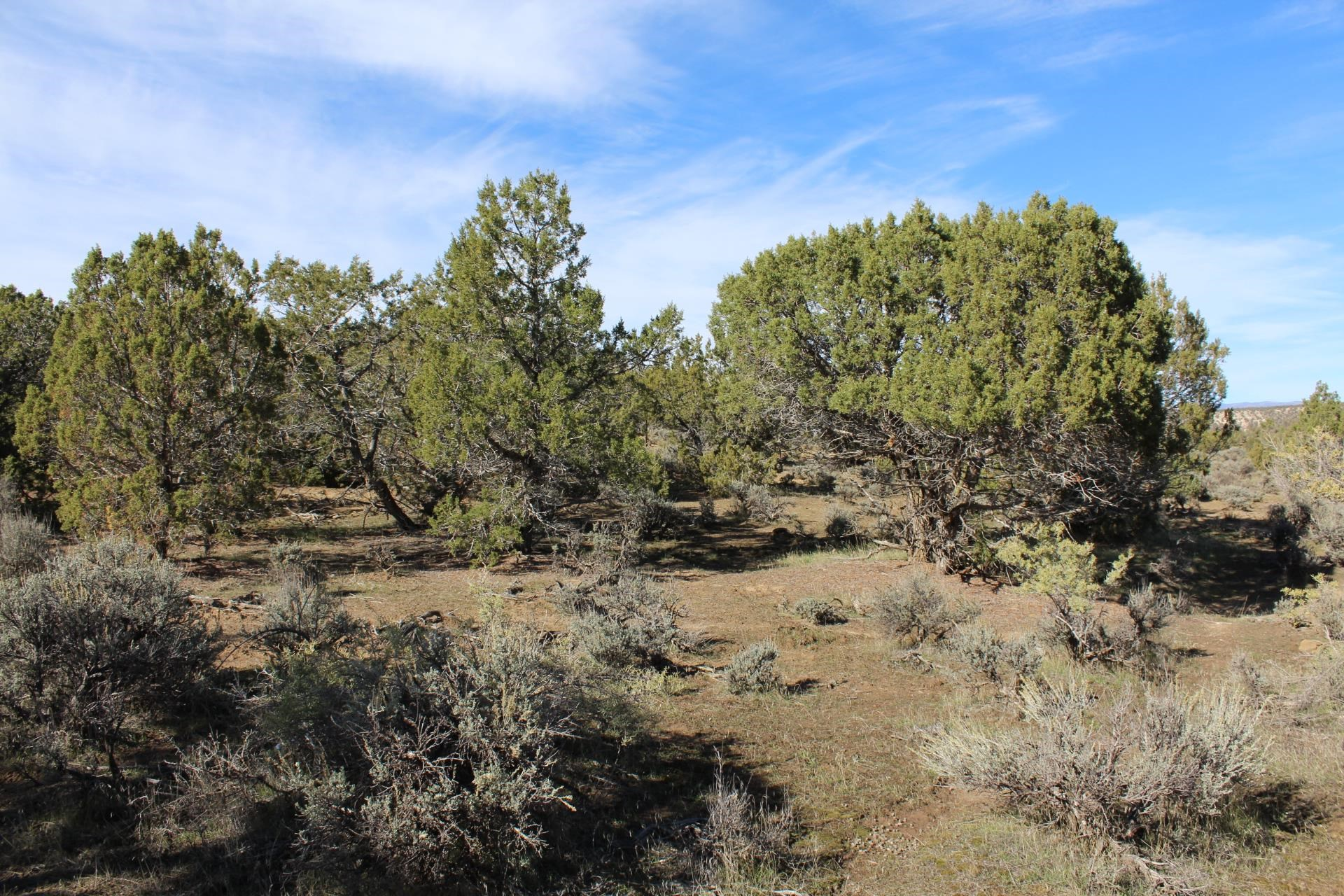 4463 Horse Canyon Road Property Picture 18