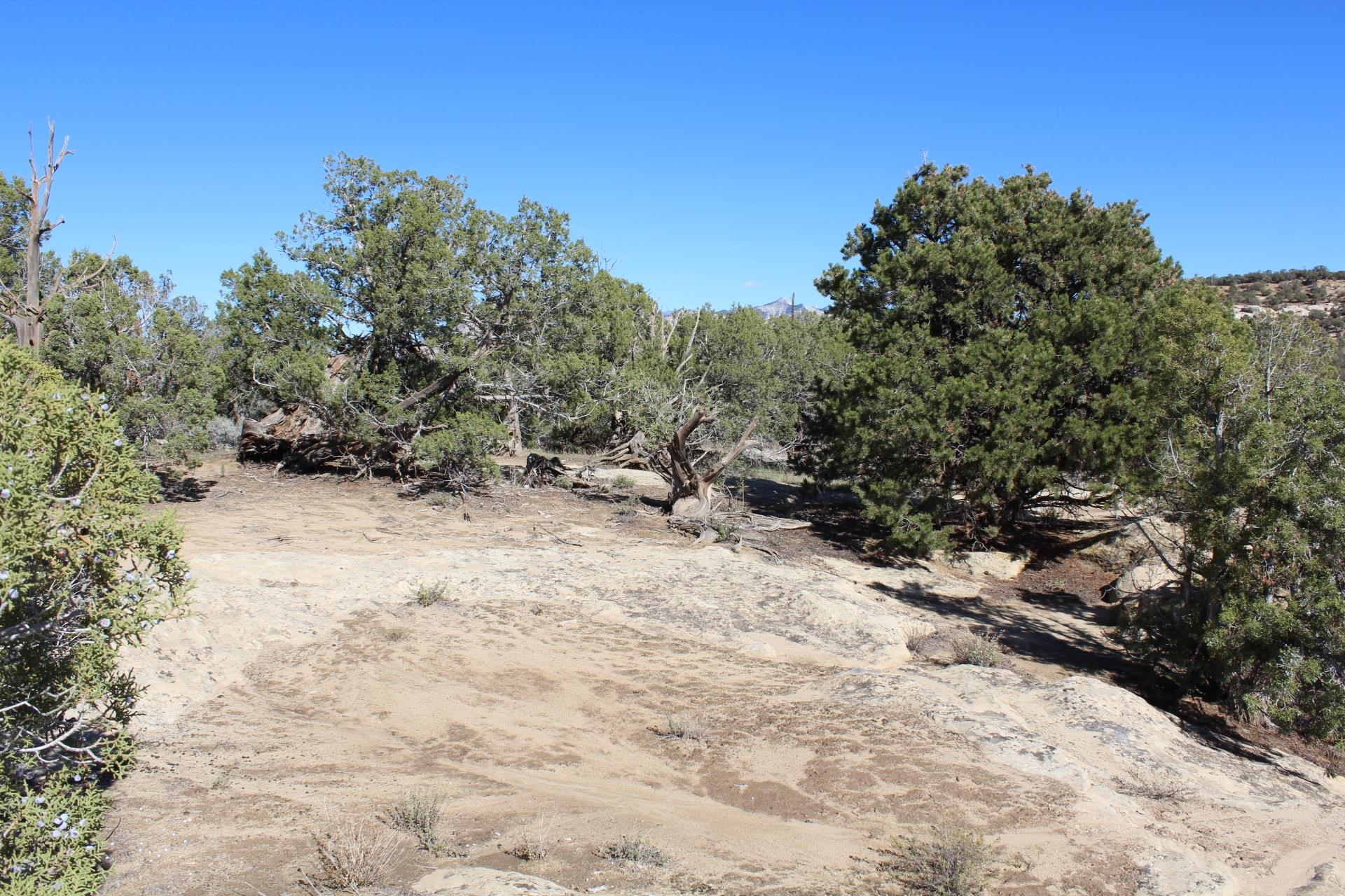 4463 Horse Canyon Road Property Picture 7