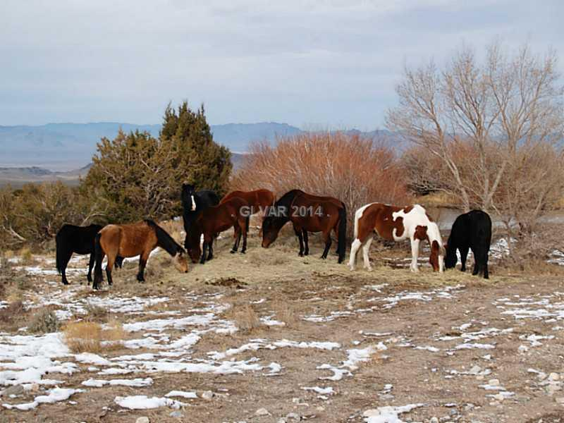 12 CLEARVIEW Property Photo - Cold Creek, NV real estate listing