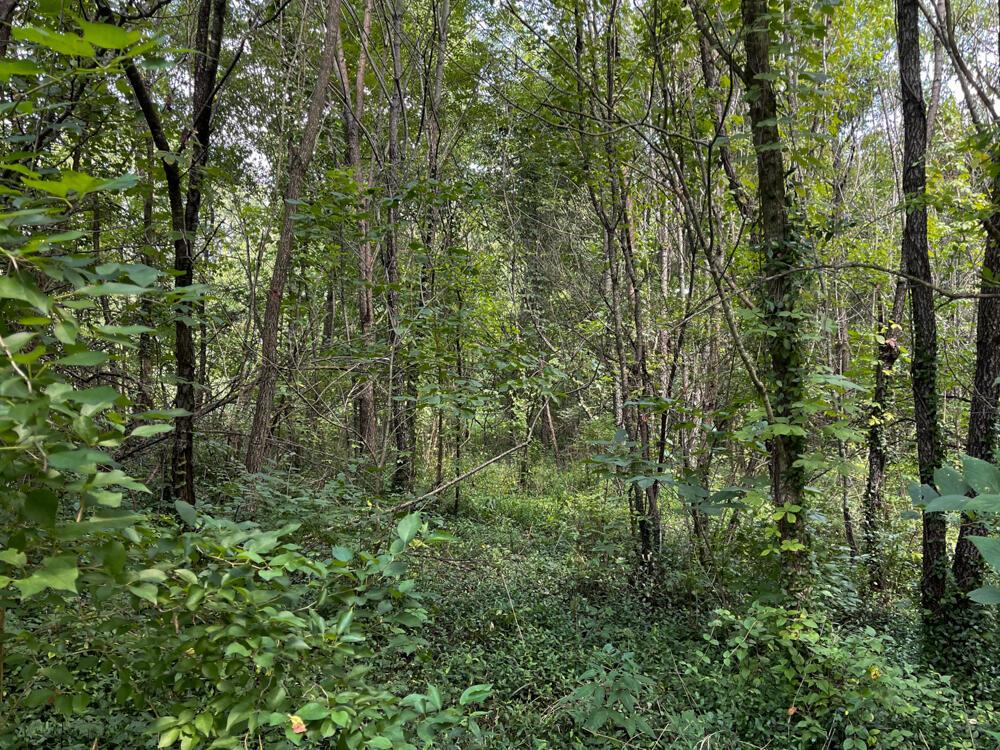 3375-3491 Briar Hill Road Property Photo 3