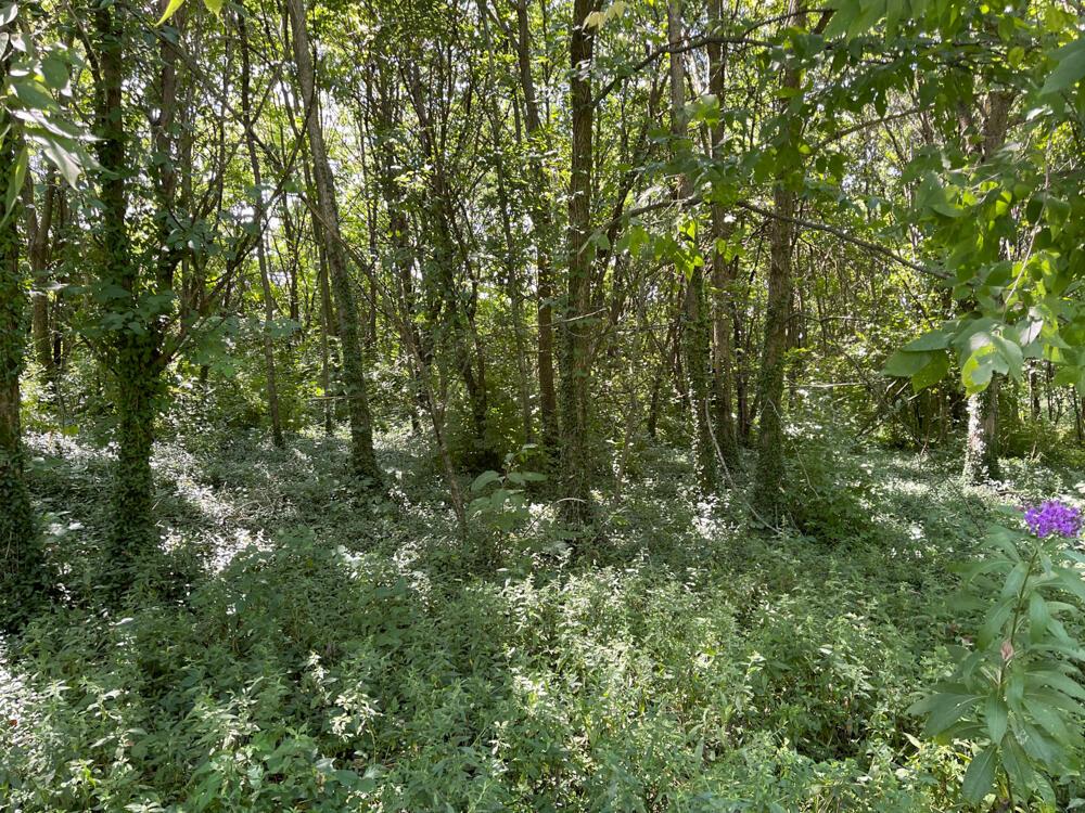 3375-3491 Briar Hill Road Property Photo 75