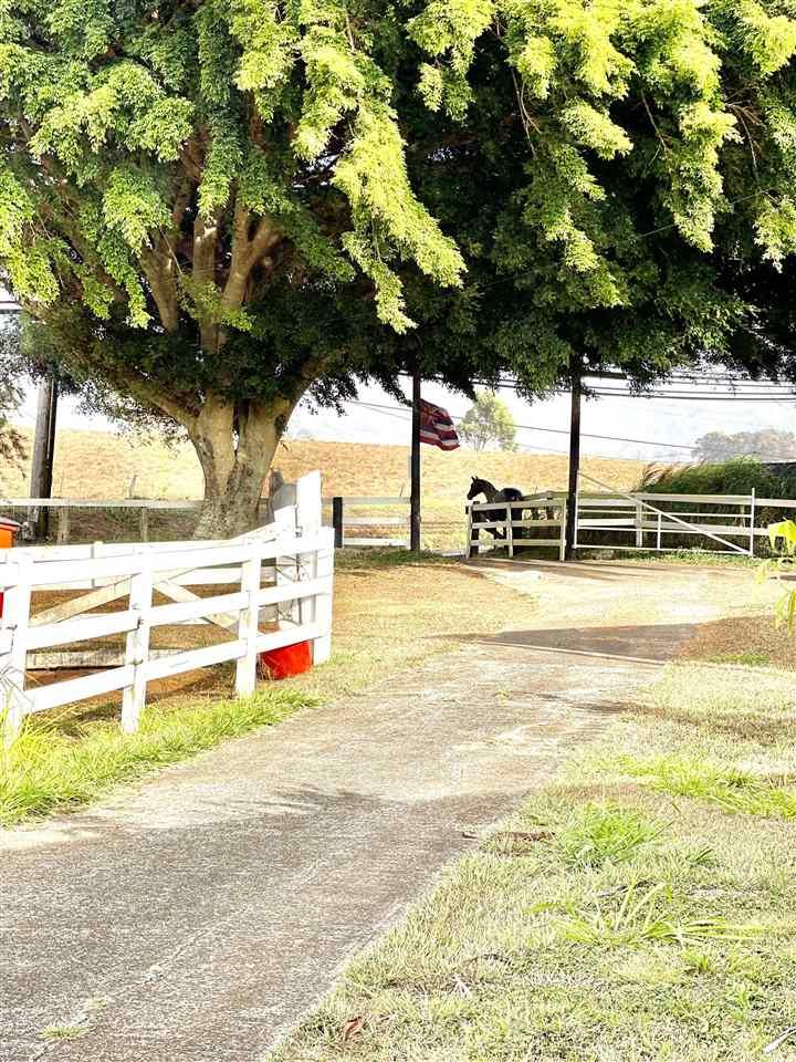 1491 Makawao Ave Property Photo 12