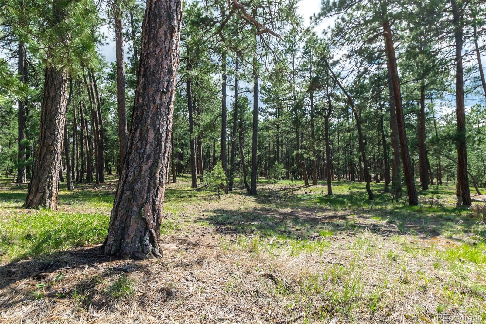 19124 Hilltop Pines Path Property Photo - Monument, CO real estate listing