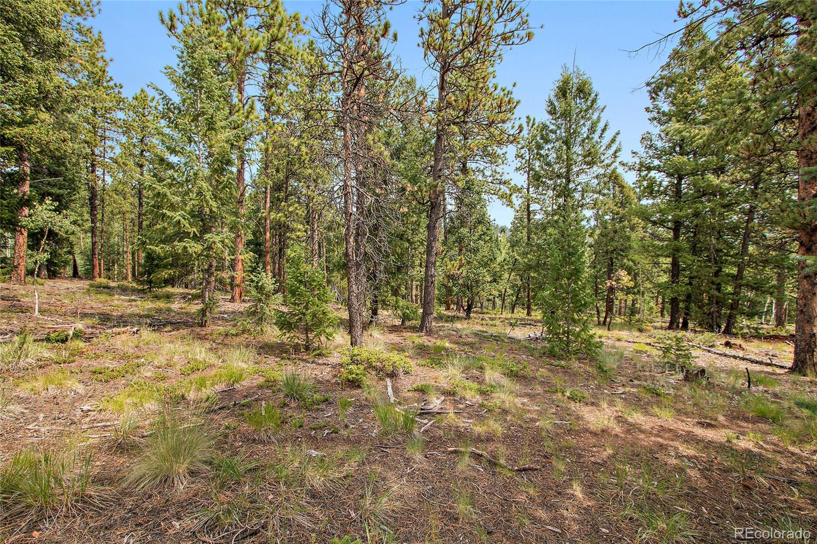 148 Ridge Lane Property Photo - Bailey, CO real estate listing