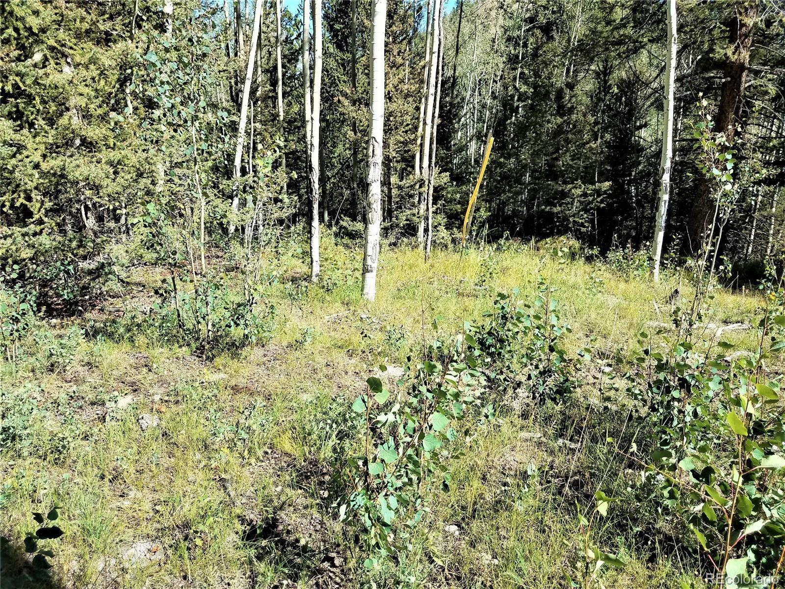 2250 County Road 1 Property Photo - Cripple Creek, CO real estate listing