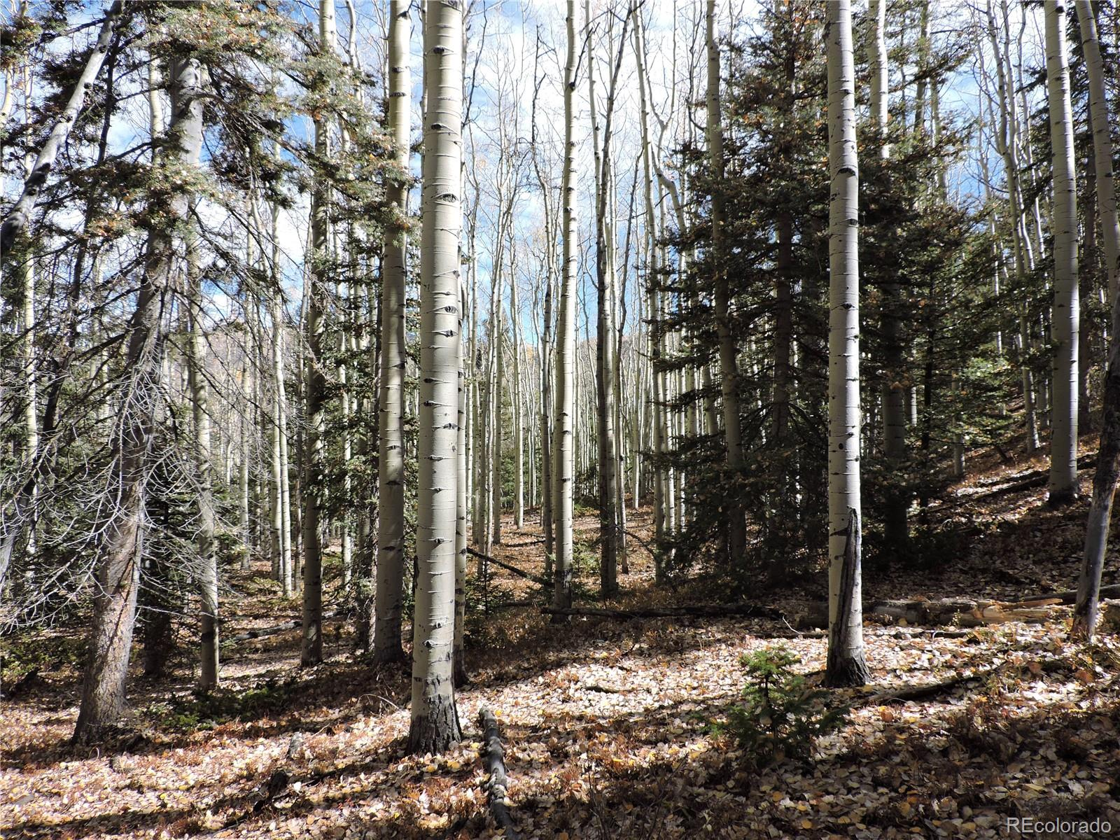6746 Starkweather Road Property Photo - Fort Garland, CO real estate listing
