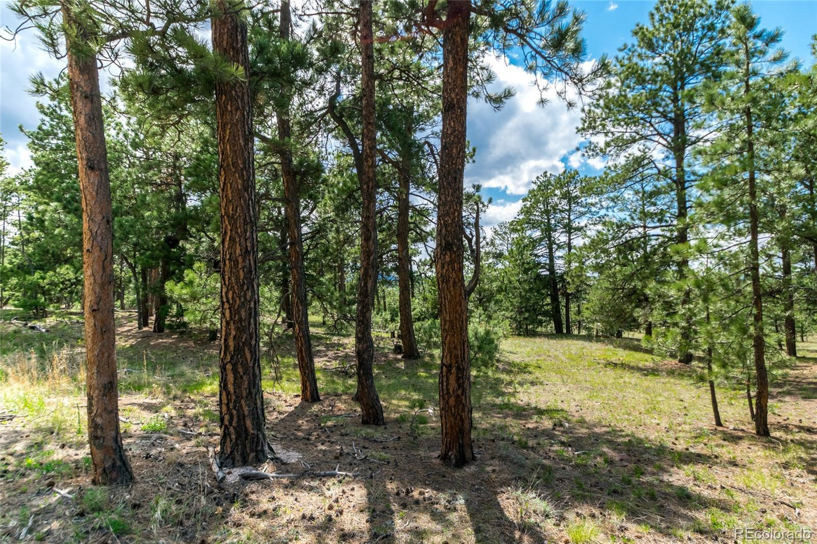 19165 Hilltop Pines Path Property Photo - Monument, CO real estate listing