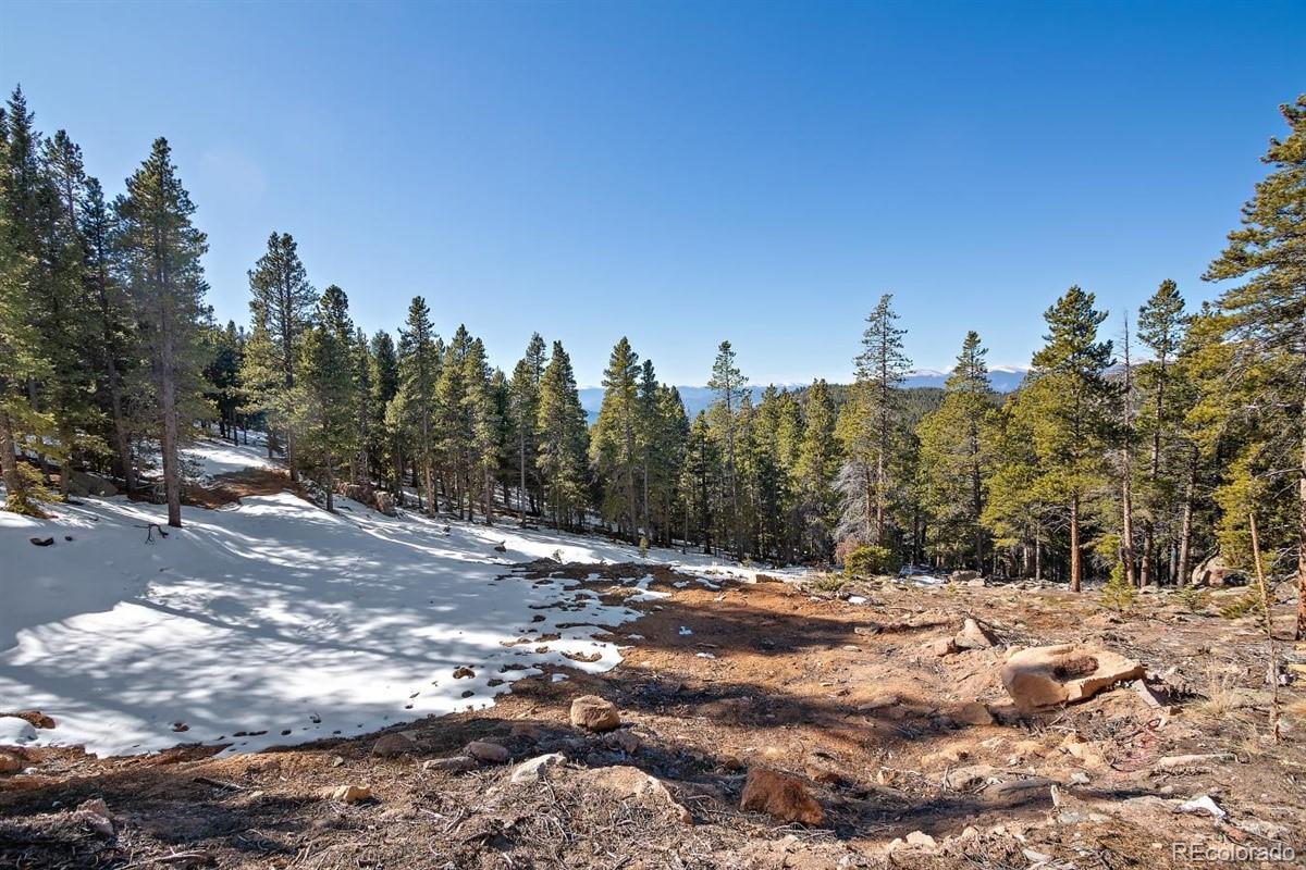 11275 Bear Run Trail Property Photo - Conifer, CO real estate listing