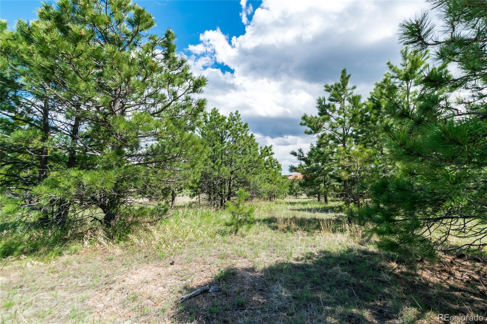 1605 Trumpeters Court Property Photo - Monument, CO real estate listing
