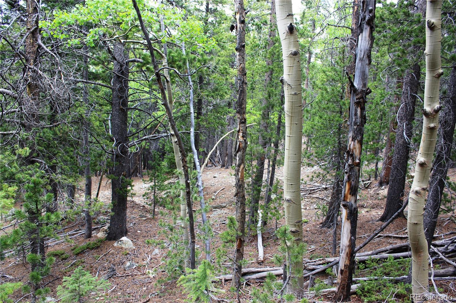 00 Virginia Canyon Road Property Photo - Central City, CO real estate listing