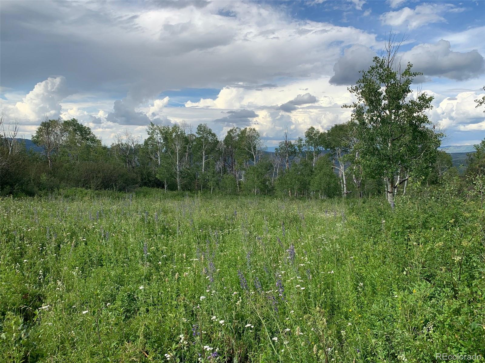 Harrison Creek Road Property Photo - Collbran, CO real estate listing