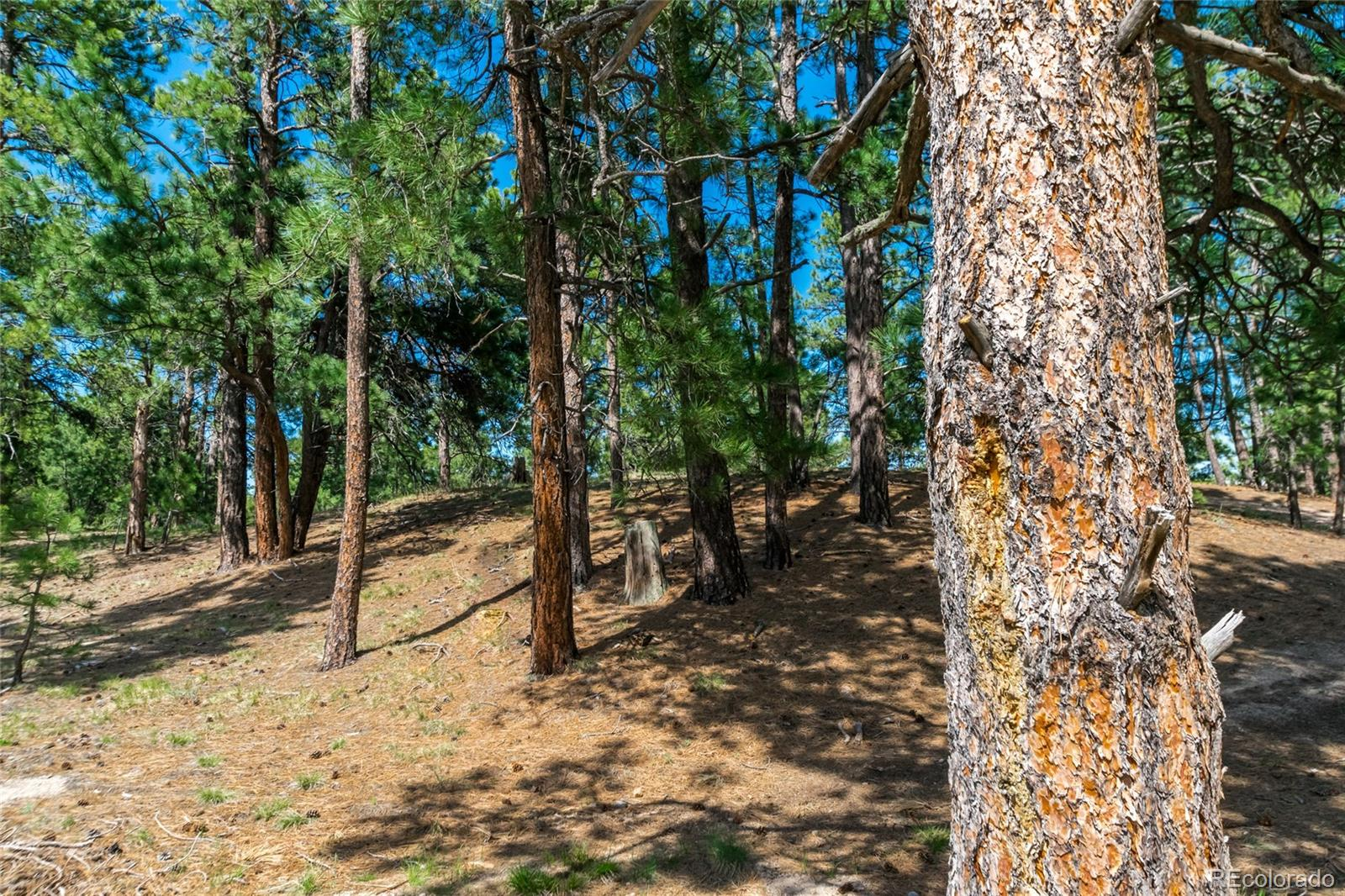 18845 Hilltop Pines Path Property Photo - Monument, CO real estate listing