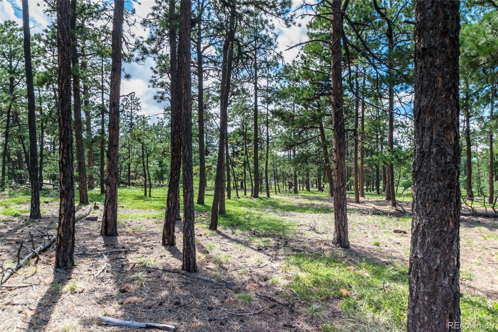 19365 Hilltop Pines Path Property Photo - Monument, CO real estate listing