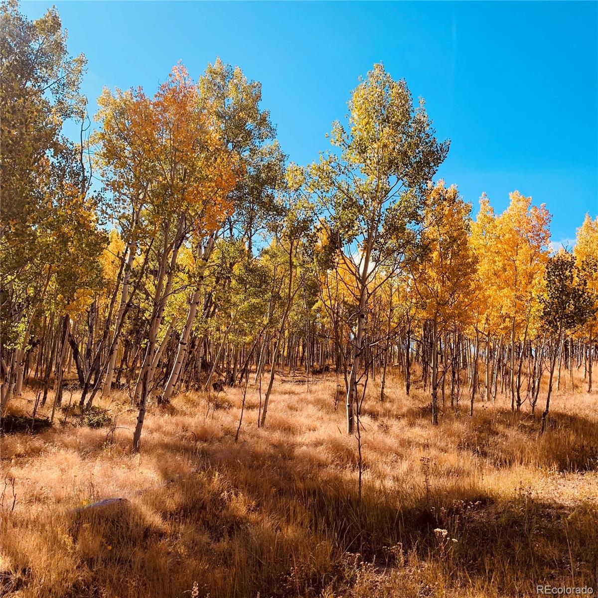178 Summit Property Photo - Lake George, CO real estate listing