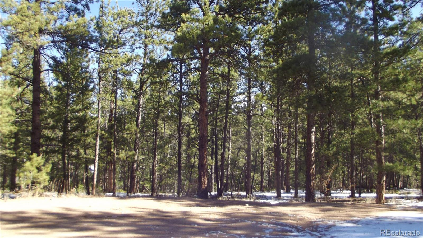 299 Pine Forest Road Property Photo - Lake George, CO real estate listing