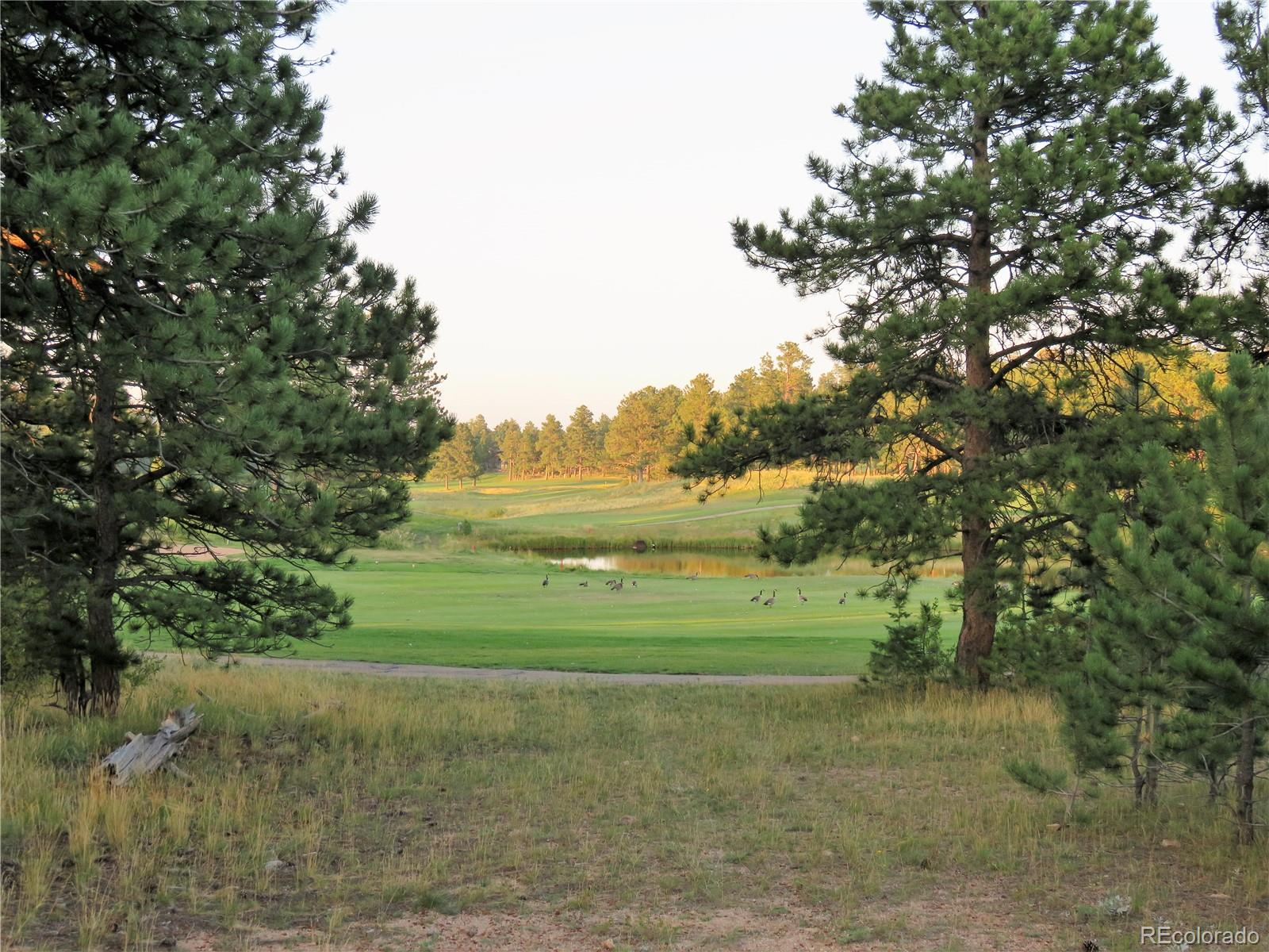 E Fox Acres Drive Property Photo - Red Feather Lakes, CO real estate listing