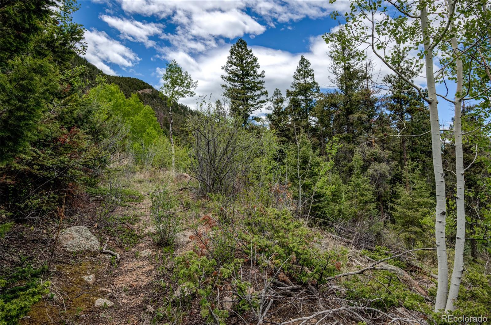 9005 Mountain Road Property Photo - Cascade, CO real estate listing