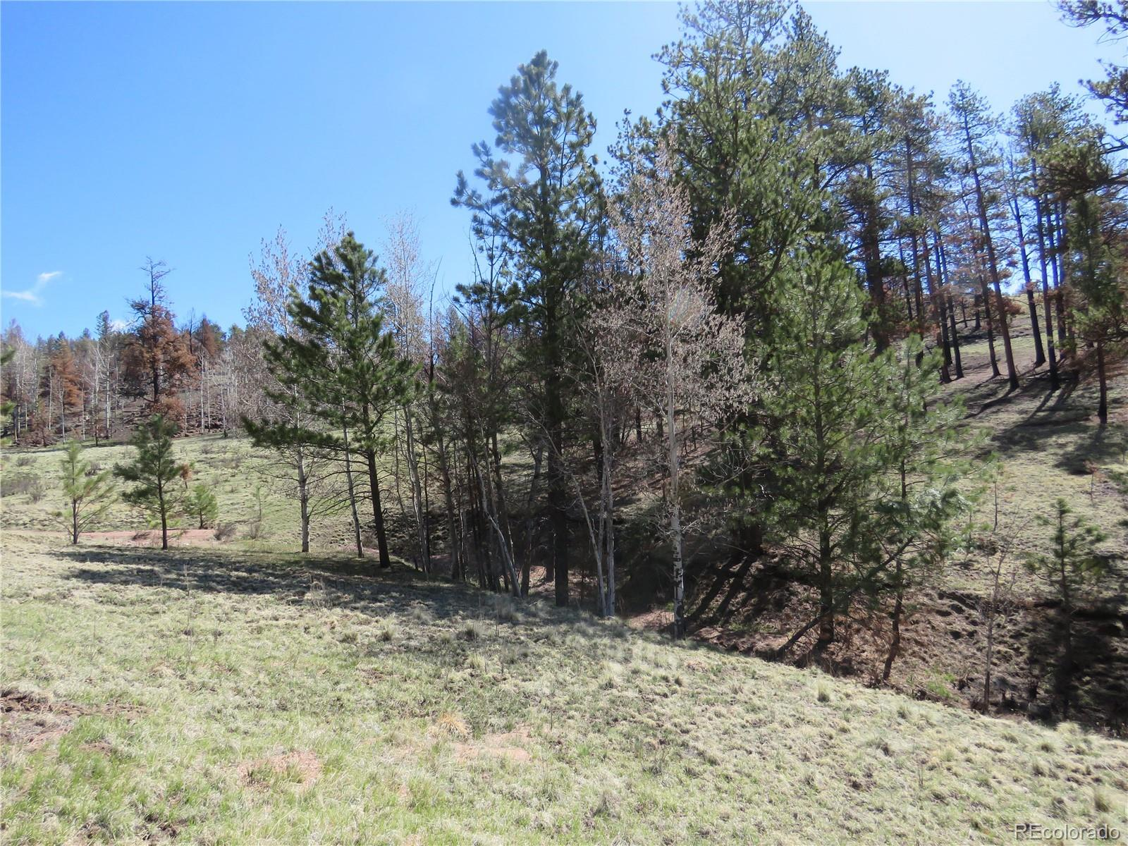 238 Chateau West Drive Property Photo - Florissant, CO real estate listing