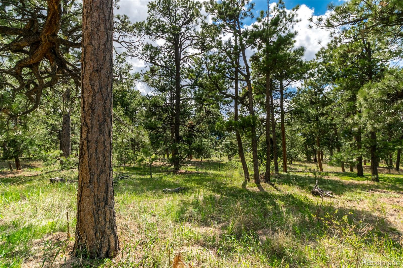 19245 Hilltop Pines Path Property Photo - Monument, CO real estate listing