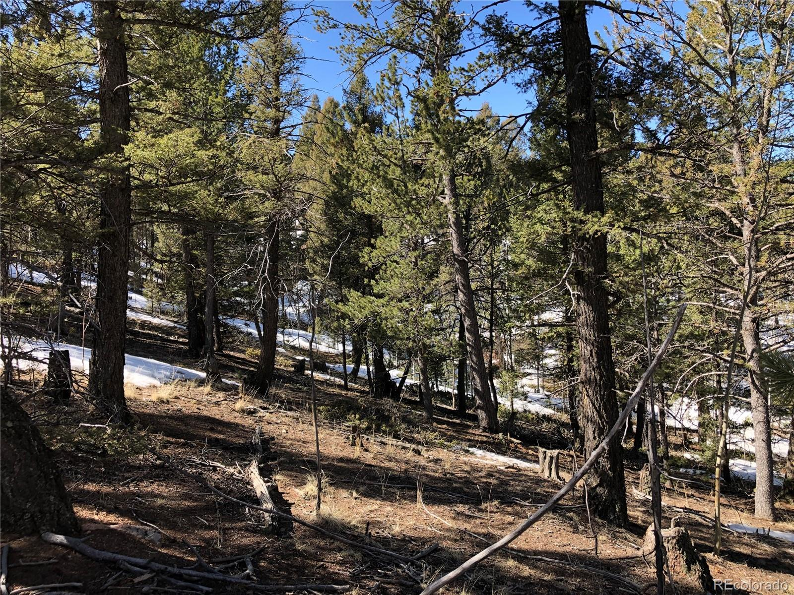 320 Saguache Drive Property Photo - Florissant, CO real estate listing