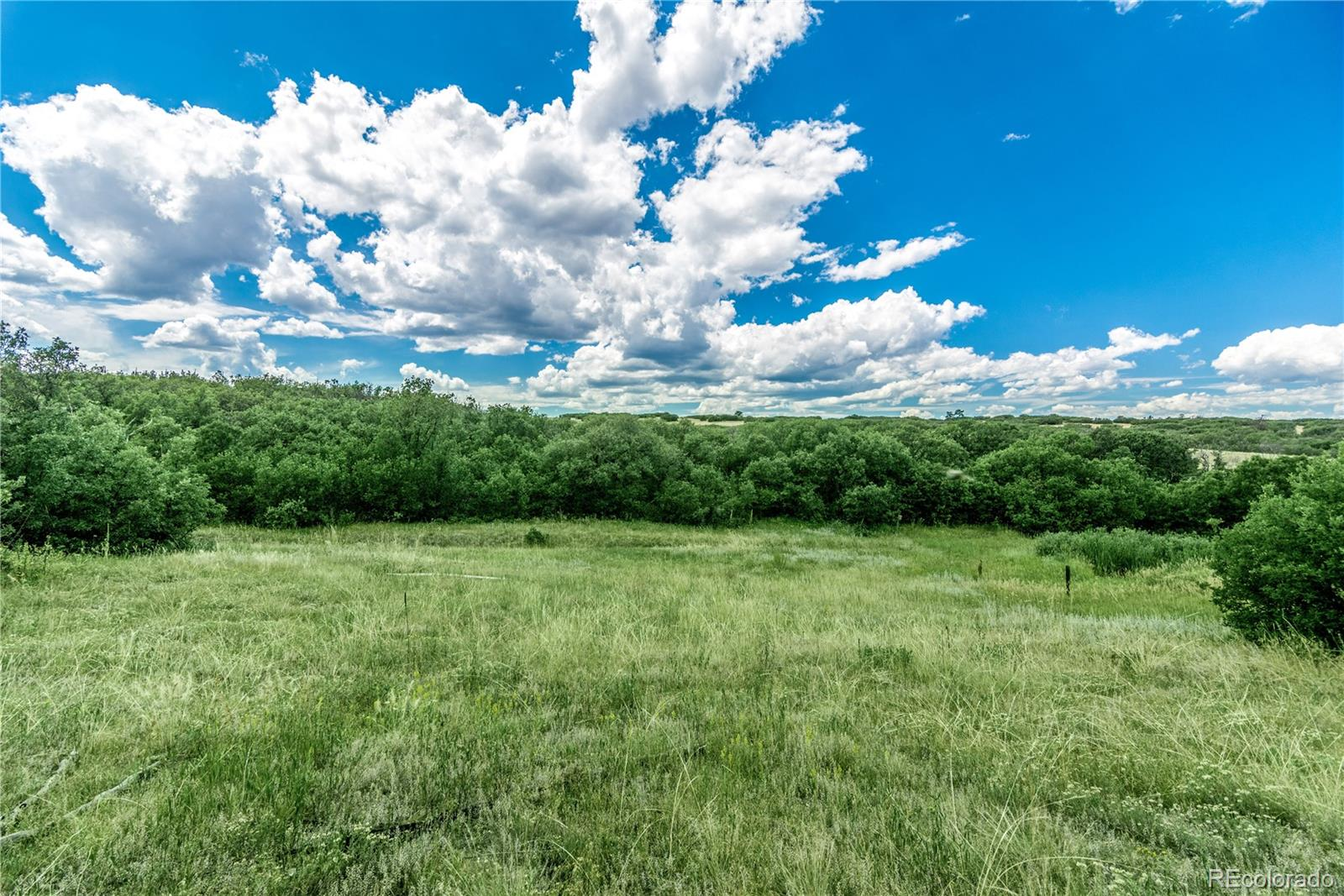 13097 Whisper Canyon Road Property Photo - Castle Pines, CO real estate listing