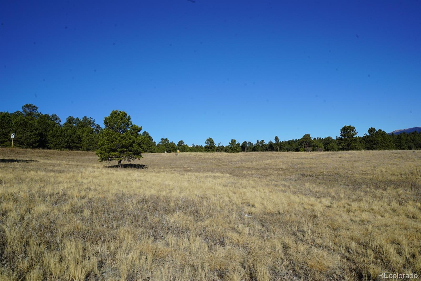 10 Bulldogger Drive Property Photo - Bailey, CO real estate listing