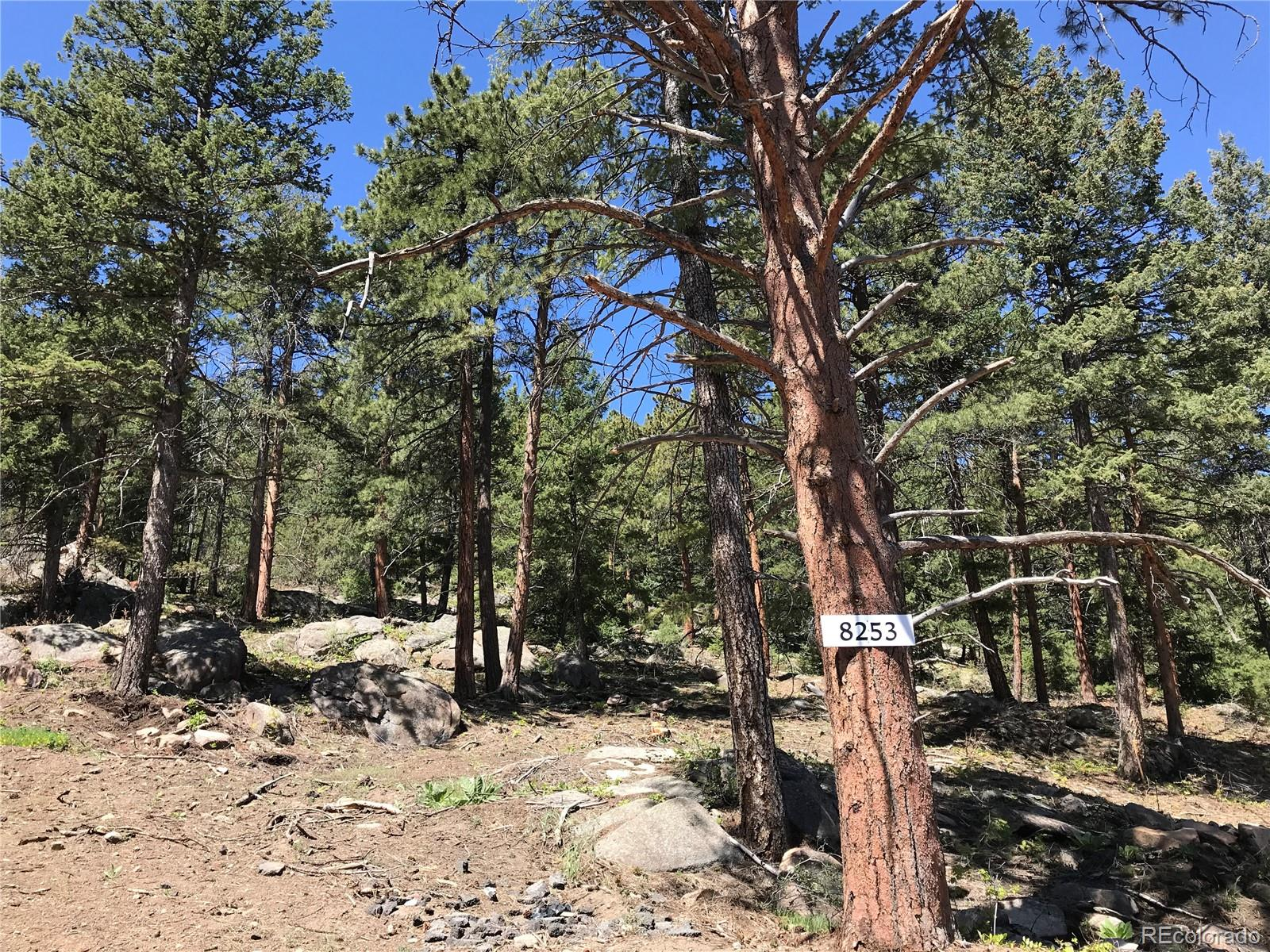 8253 Stags Leap Trail Property Photo - Morrison, CO real estate listing