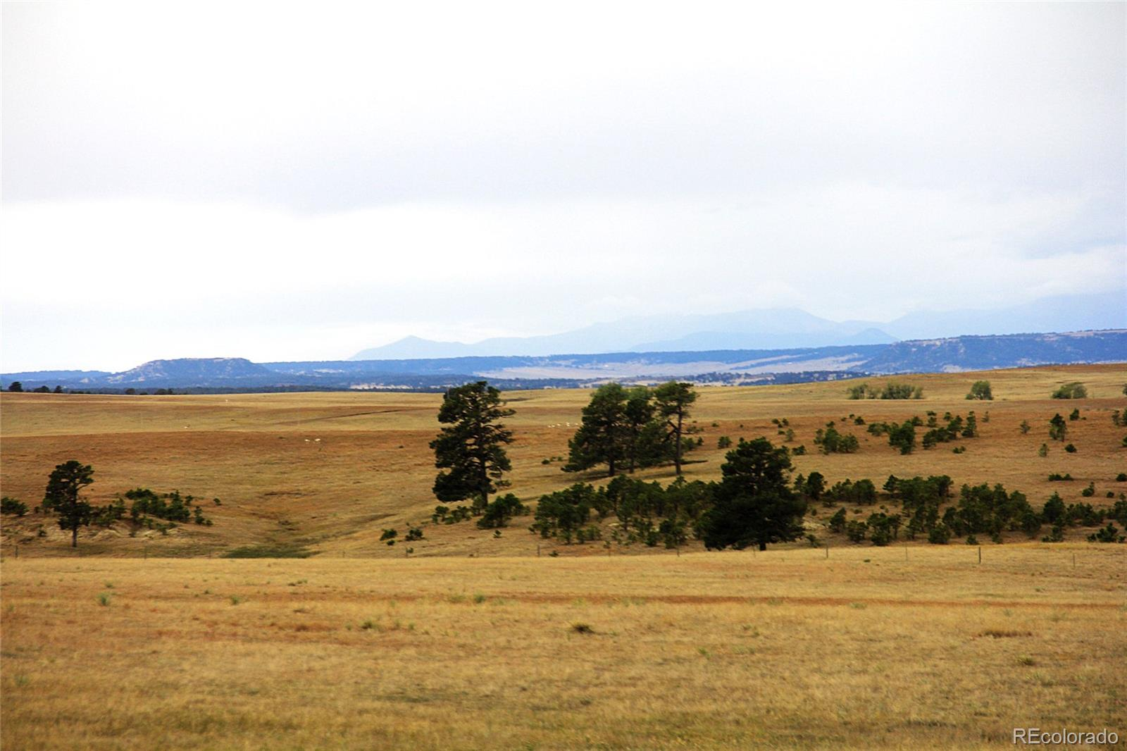 0 County Rd. 99 Property Photo - Ramah, CO real estate listing