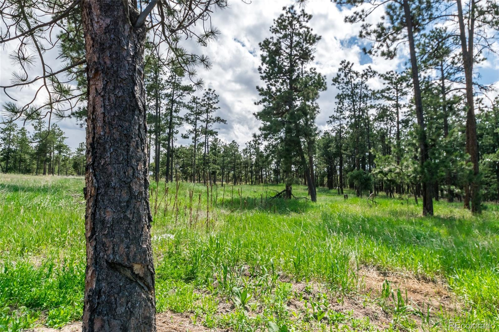19405 Hilltop Pines Path Property Photo - Monument, CO real estate listing