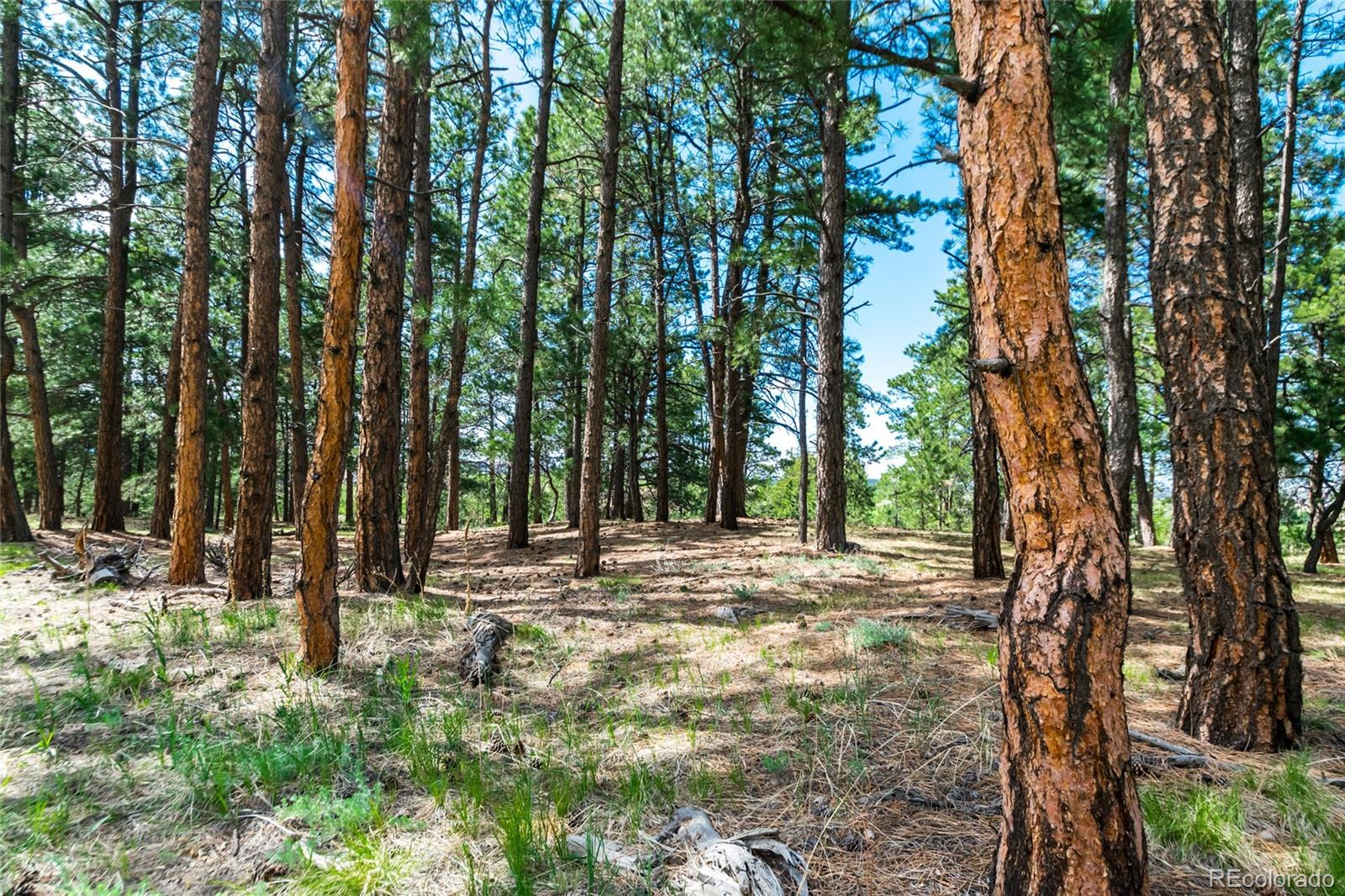 19125 Hilltop Pines Path Property Photo - Monument, CO real estate listing