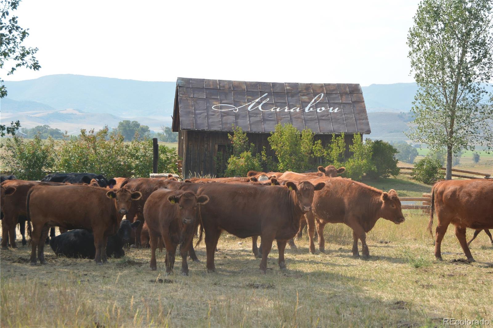 27225 Cowboy Up Road Property Photo 1