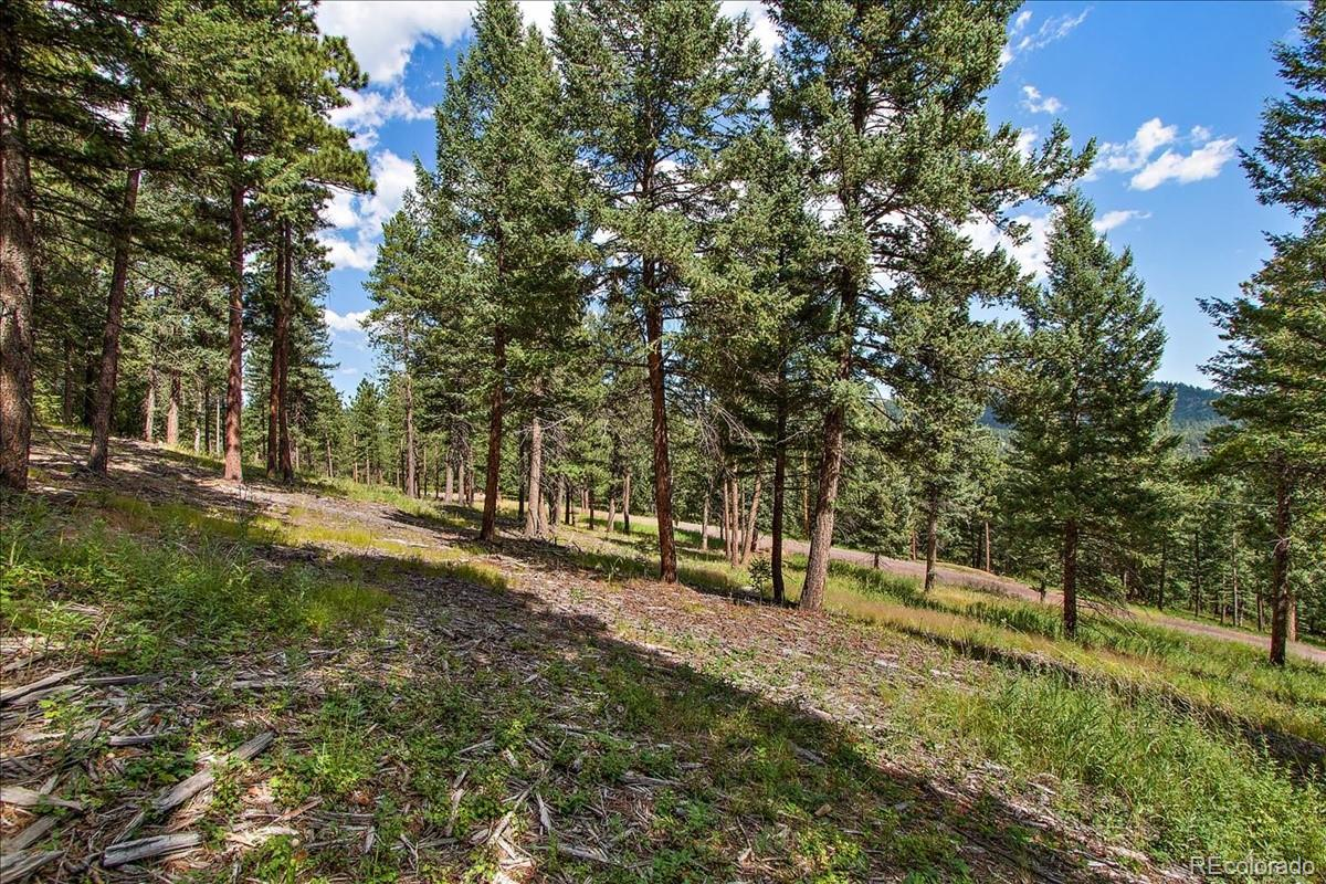 7313 Plowsher Way Property Photo - Morrison, CO real estate listing