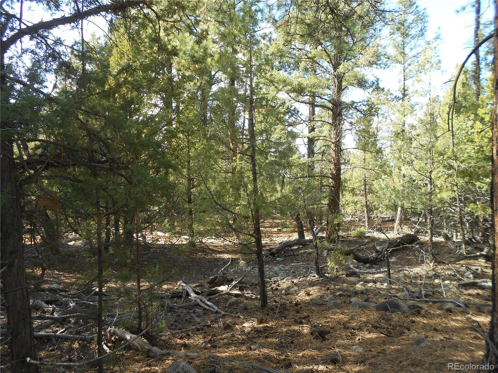Pawnee Court Property Photo - Mosca, CO real estate listing